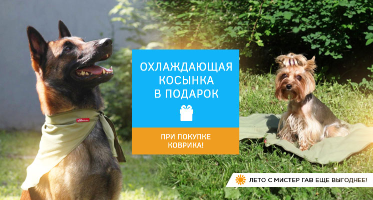 http://imgs4.mrgav.ru/main/ohlazhdayuschaya_kosynka_v_podarok_k_kovriku.jpg